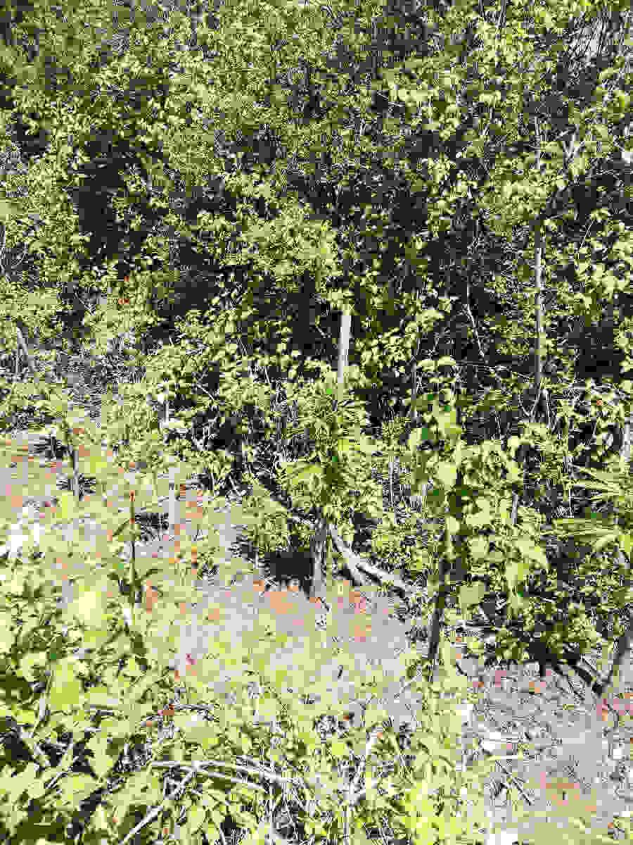 Συνελήφθησαν δύο άτομα σε διαφορετικές περιπτώσεις σε Ημαθία και Σέρρες για καλλιέργεια δενδρυλλίων κάνναβης