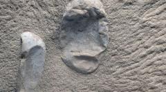Κίνα: Ανακαλύφθηκαν 215 απολιθωμένα αβγά πτερόσαυρων ηλικίας 120 εκατ. ετών