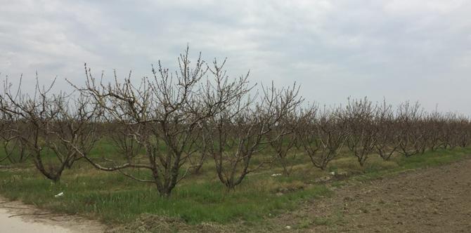 """ΑΠ. ΒΕΣΥΡΟΠΟΥΛΟΣ: """"Με τρία χρόνια καθυστέρηση η έναρξη της διαδικασίας για την την καταβολή των αποζημιώσεων στους αγρότες της Ημαθίας που οι δενδροκαλλιέργειες τους ξεράθηκαν"""""""