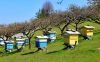 Π.Ε Ημαθίας: Μέχρι τις 20 Ιανουαρίου οι αιτήσεις για αντικατάσταση κυψελών και στήριξης της νομαδικής μελισσοκομίας