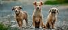 Δήμος Βέροιας : Με αφορμή τα αναγραφόμενα σε δημοσιεύματα  που κυκλοφορούν στα ΜΜΕ σχετικά με την διαχείριση των αδέσποτων ζώων