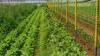 Υπεγράφη η ΚΥΑ για πληρωμή 60 εκατ. ευρώ για τα αγροπεριβαλλοντικά μέτρα του ΠΑΑ