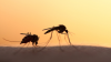 ΔΗΜΟΣ ΒΕΡΟΙΑΣ:ενημέρωση για τα κουνούπια