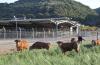 Ρυθμίσεις για την ίδρυση και λειτουργία κτηνοτροφικών εγκαταστάσεων.
