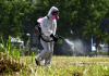 Ψεκασμοί απόψε το βράδυ στην περιοχή της Τ.Κ. Αγίας Μαρίνας για την αντιμετώπιση των ακμαίων κουνουπιών