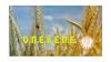 Πληρωμές 3,7 εκατ. ευρώ από τον ΟΠΕΚΕΠΕ σε 14.794 δικαιούχους