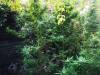 Από το Τμήμα Ασφάλειας Αλεξάνδρειας συνελήφθη 51χρονος στην Ημαθία για καλλιέργεια κάνναβης