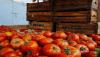 Ντομάτες – δηλητήριο στον Πειραιά: Φορτίο 4 τόνων – Από που εισήχθησαν